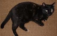 My cat Pepper