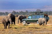 Safari Drive in Africa