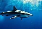 Welcome Back Sharks!