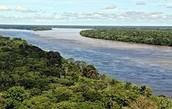 נהר האמזונס