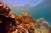 New research shows that corals and humans share the same genes