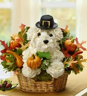 Pilgrim Arrangement with pumpkins and leaves