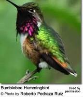 Hummingbird's body