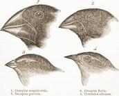 #1 beaks