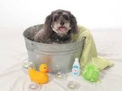 We can help your dog with a warm bath