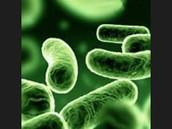 curiosidades de las bacterias