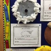 Mrs. Schulz's Sheep