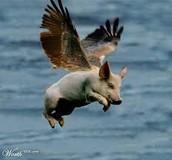 Se anticipa la venta de... ¡¡cerdos voladores!!