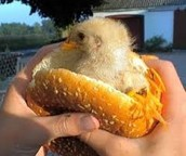Fresh Chicken Sandwich