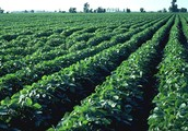 Have Your Crops Resistant to Pests!