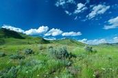 What is the Grassland like?