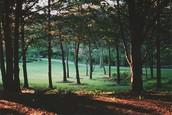 Forets d'arbres