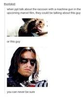 Bucky (again)
