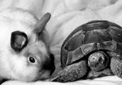 Fable:  The Tortoise and the Hare
