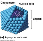Polyhedral Virus: