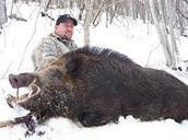 Boar Hunted Safely