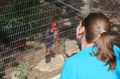 Parrot @ Austin Zoo