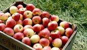 kast õunu 3.33€