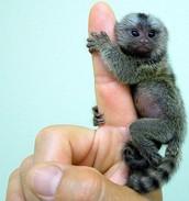 litlist monkey ever .