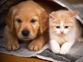 http://www.wowamazing.com/cats/24-dogs-and-cats-that-act-like-they-are-best-fiends/