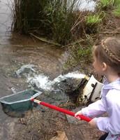Pond Dipping at Saluda Shoals!