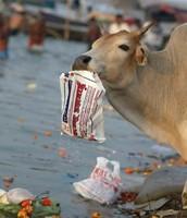 Litter at local fairs harming land animals.