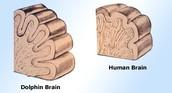 Brains/smarts