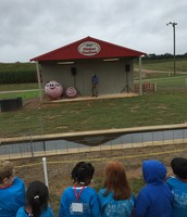 Pig Races at the Farm