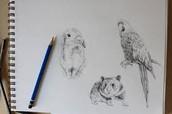 drawling animals