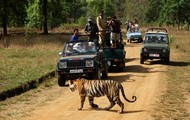 Jungle Safari - Kanha