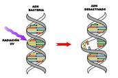 Esgtructura general de una bacteria
