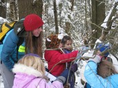 Kindergartners how to tap maple trees.