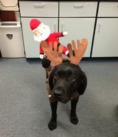 Delta, the black nosed reindeer!