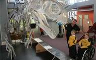 dinosuar bones