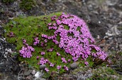 Plants in the Tundra include...