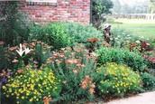 Aunt's Garden (Sedigeh)