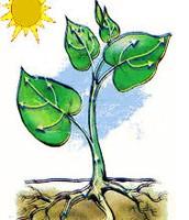 """النبته تحتاج الى الضوء """" اشعة الشمس """" لتنمو"""
