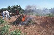 Here is a picture of someone burning crops because toxins from endospores