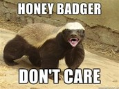 Bio about honey badger