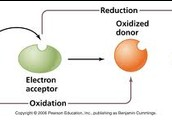 Oxidation Reduction Reaction