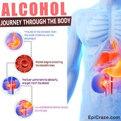 Alcohol and the Body