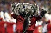 Big Al! Our Mascot