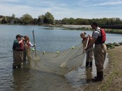 Seining for organisms