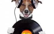 ...escuchamos musica!