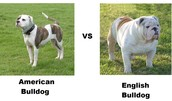 species of dogs