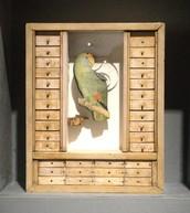 Aviary Parrot Box