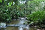 African Rainforests