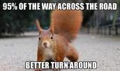 dumb squirrel