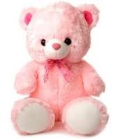 the cute the teddy   the cute the teddy