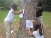 Tree Rubbings